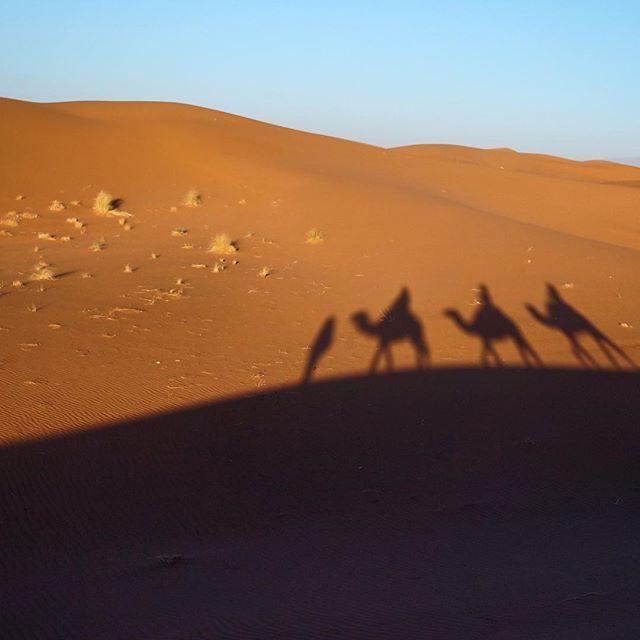 A ride at sunrise. That was a breathtaking morning! #Sahara #goldensunrise #SunriseOnSahara #Morocco #BestOfMorocco #travel #earthpic  #beautifulworld #beautifuldestination