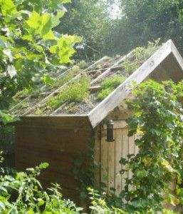 If preserving the environment means something to you, here's what to do to ensure that you hire a truly green siding contractor.: Green Roofs, Gardens Ideas, Rooftops Gardens, Design Gardens, Gardens Greenhouses, Gardens Design, Backyard Gardens, Gardens Sheds, Gardens Compost