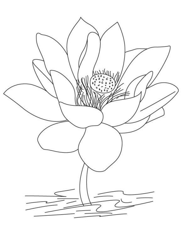 Lotus Flower Coloring Pages | Kleurplaat | Flower Coloring ...