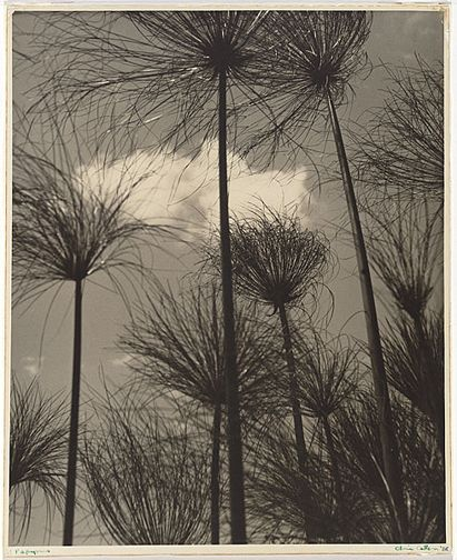 Olive Cotton Papyrus 1938 silver gelatin print