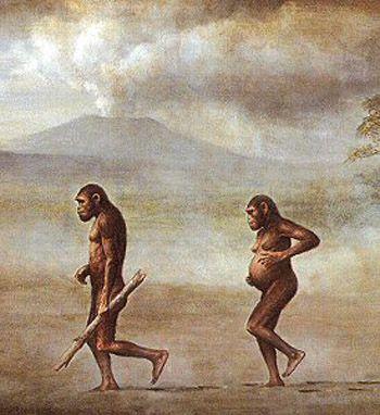 Austrolopithecus. La pérdida del vello corporal, ventaja comparativa. Ocurrió hace 3 millones de años, se cree que al haber menos lluvias, se redujeron los bosques y se transforma en sábana. Necesitan bajar de los árboles y recorren grandes distancias, incorporando la carne, postura erguida más propicia para otear el horizonte. Lejos de los árboles, el calor era mayor. La evolución prescindió de los pelos y multiplico las glándulas sudoríparas que son más eficientes para disminuir el calor.