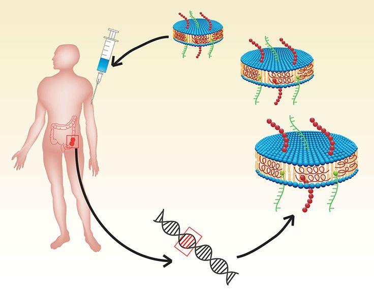 GENIO Italiano Giuseppe Cotellessa: Nanodiscs Train Immune System to Attack and Kill T...