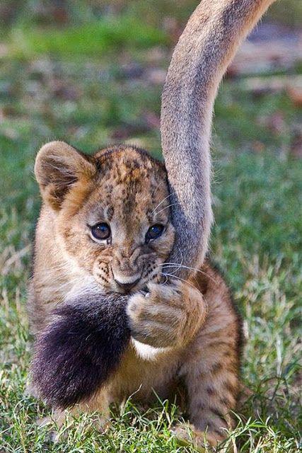 Sweetest Animals: Leon baby
