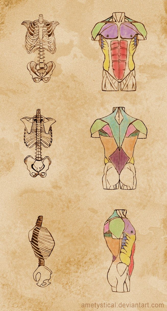 211 Best Anatomy Images On Pinterest Human Anatomy Anatomy