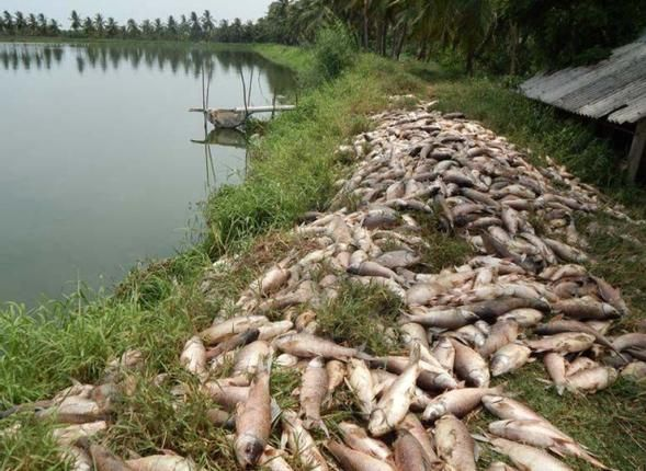 Fluctuation in temperature takes heavy toll on fish