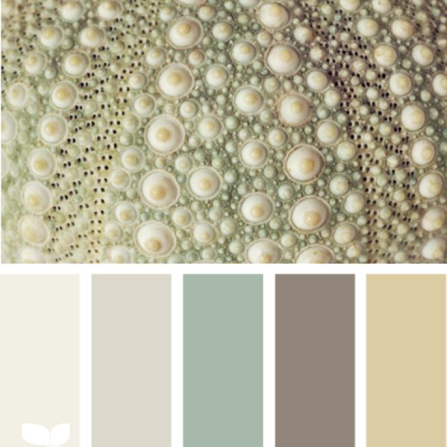 Try this calm color palette throughout your home!  #realestate