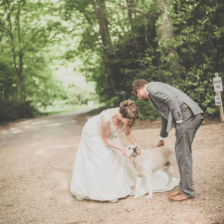 This Gorgeous Lab Snuck Into The Wedding Pictures At Burloes Hall Weddings In Royston Hertfordshire
