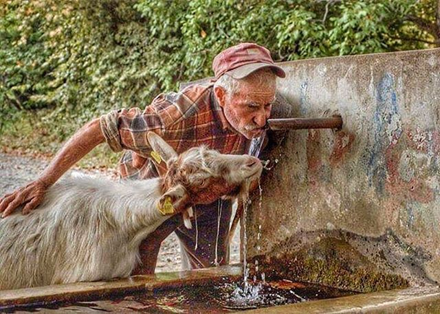 paylaşabilmek bir tas suyu... / The man who shared the water with the animals :) #Anadolu #anatolia #emek #bereketli #yağmur #tarım #çiftçi #anadolufotograf #anadoludahayat #instaanadolu #türkiye #turkey #turkeyphotooftheday #turkeystagram #yaşam #life #natural #doğa #doğaana #insanlık #instagood #instagramers #instaturkey #instagram #instalike #instalook #instagramers #tbt