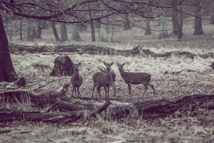 Deer #Dyrehaven Copenhagen. New Nordic collection