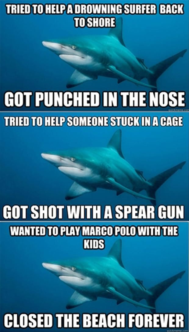 funny sharks.. telling a shark attack from the shark's pov