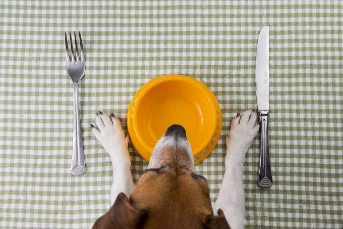 10 alimentos que o seu cão não deve ingerir