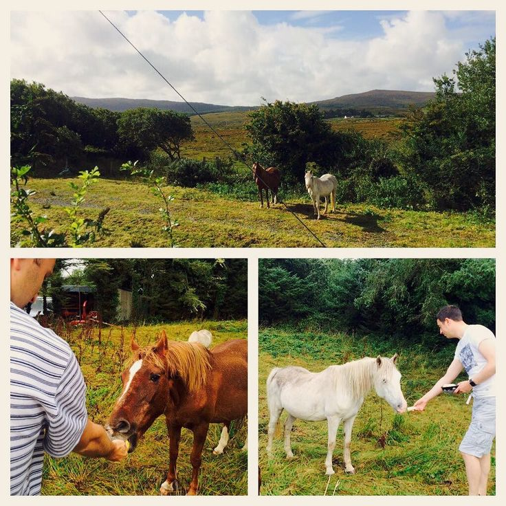 Sept 2016 Vacation Witnessing in Galway Ireland - Our lakeside home shares with the horses.  The horses were treat daily to apples and frozen bananas #jw  #jwpioneer #vacationwitnessing #oughterard #ireland #galway #salthill #ministry
