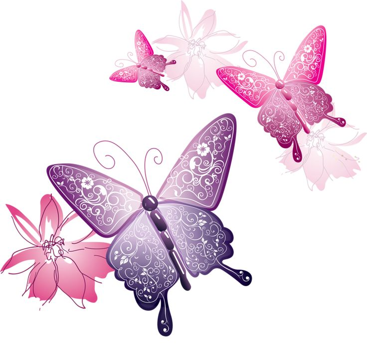 papillons_ws1031230836