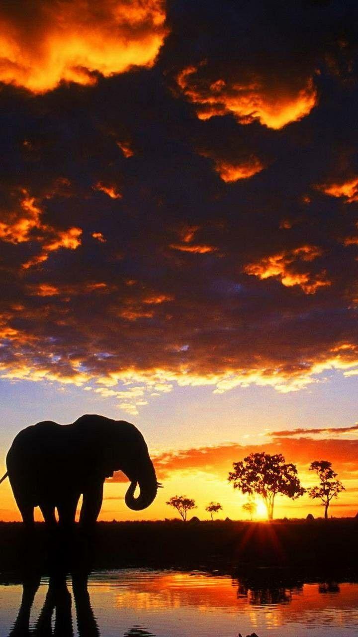 Elephant Wallpapaer Wallpaper Hd Elephant Iphone Wallpaper Elephant Background Elephant Pictures