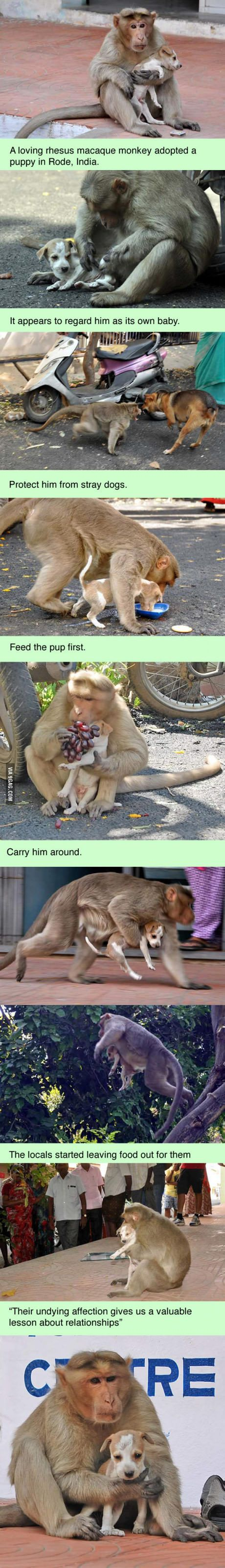 Street monkey adopted a stray puppy