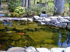 Best 25 koi ponds ideas on pinterest koi fish pond for Pond veggie filter