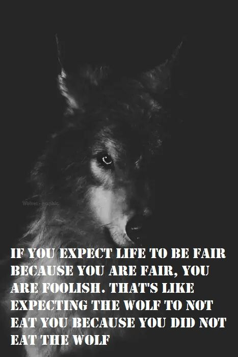 Wolves Dont Eat People Wolf Wolf Quotes Quotes Lone Wolf Quotes