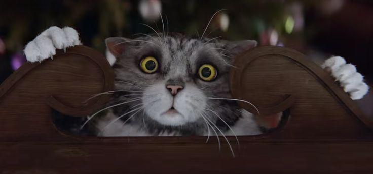 Ролик с рождественским котом всего за 3 дня посмотрели уже более 7 миллионов раз!