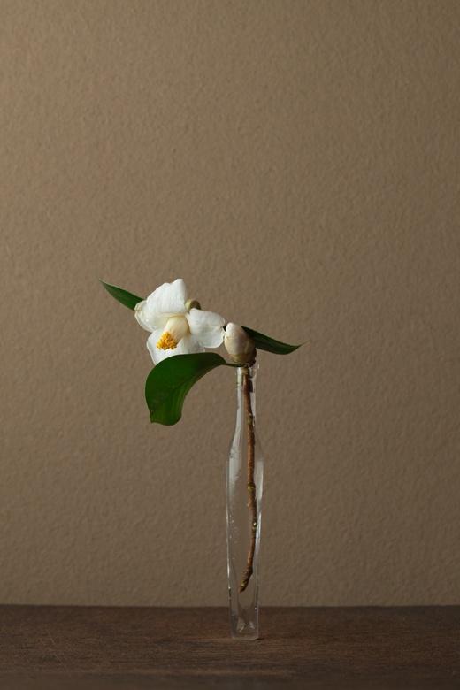 2012年4月20日(金)    ただごとならぬ気配。藪椿の白は稀です。   花=白藪椿(シロヤブツバキ)   器=古ガラス細瓶(20世紀)