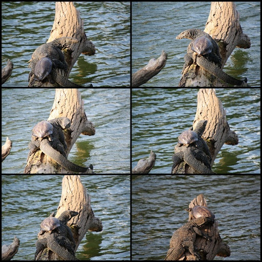 turtle in kandy lake