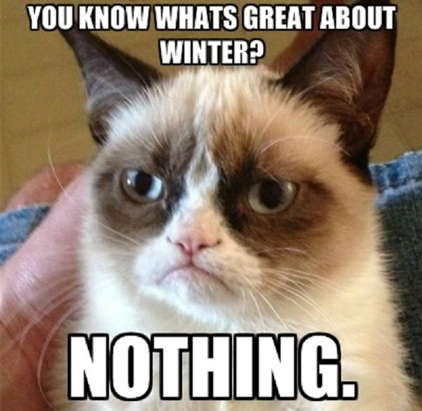Clearly Grumpy Cat hasn't tried this delicious #WinterWarmer: Aromatic Beef Stew with Peaches. Yum!  Get it here: http://bit.ly/28RuY6J