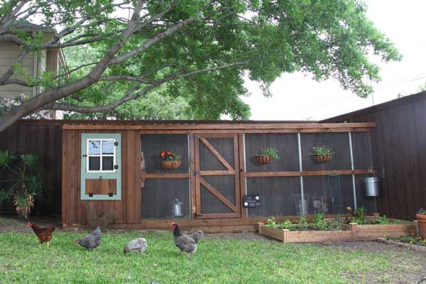 10 ways to build a better chicken coop trees a tree and for Cool chicken coop plans