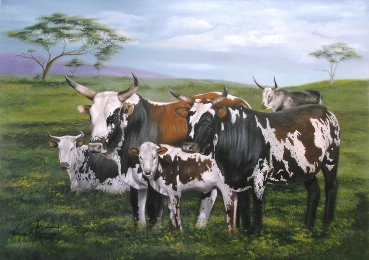 Nguni's 118cm x 84cm Oil on canvas
