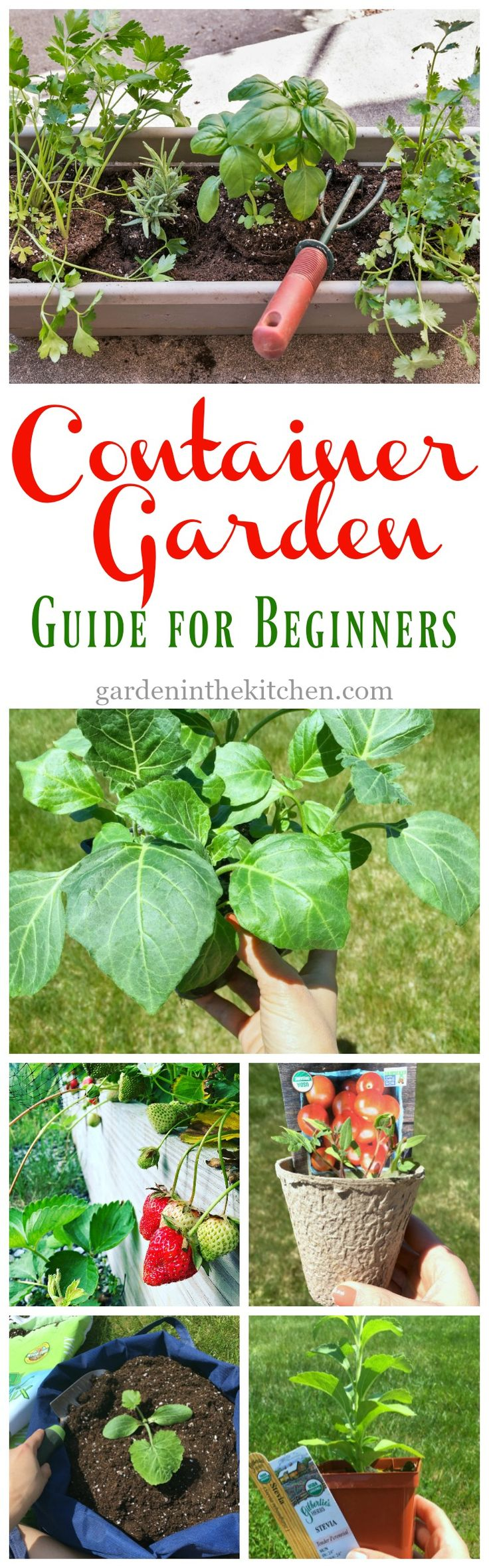 25 best ideas about garden guide on pinterest vegetable gardening date plant and greenhouse - Container gardening for beginners practical tips ...