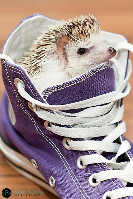 Daddy had a #hedgehog, used to call him Blue. And his favorite thing to play with used to be my good ol' shoe.  - Edgar Winter - Good ol' Shoe, little improved ;)
