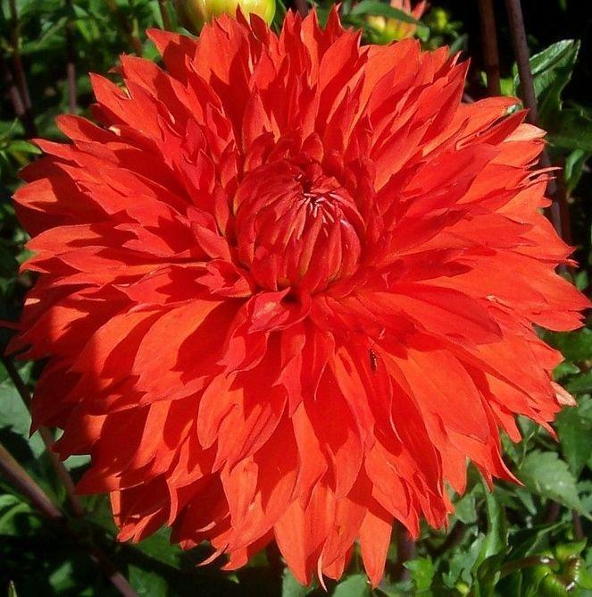 les 103 meilleures images du tableau flowers sur pinterest