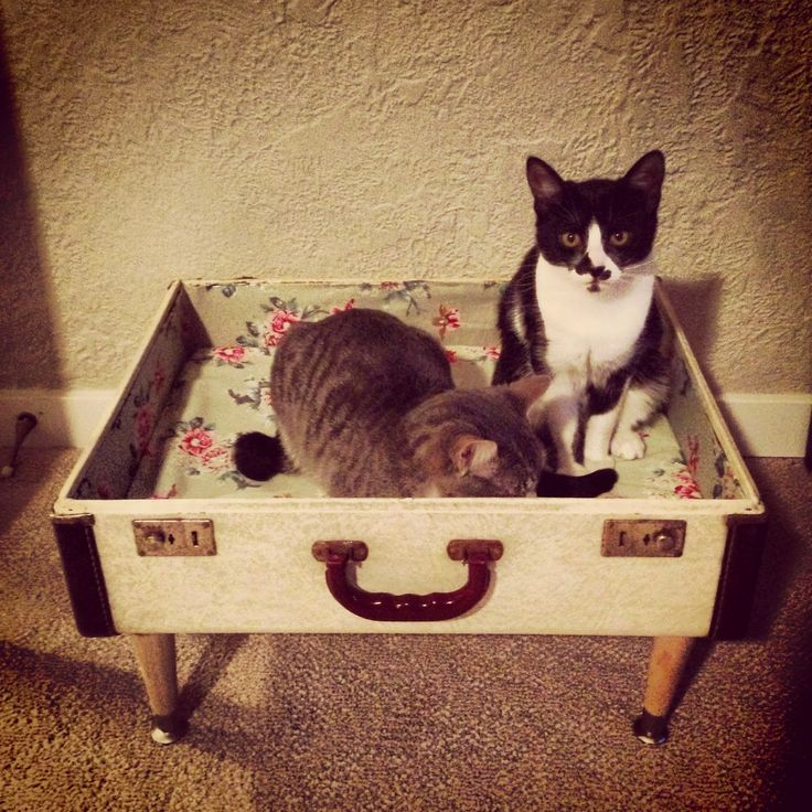 DIY cat bed! Made from a vintage Suitcase