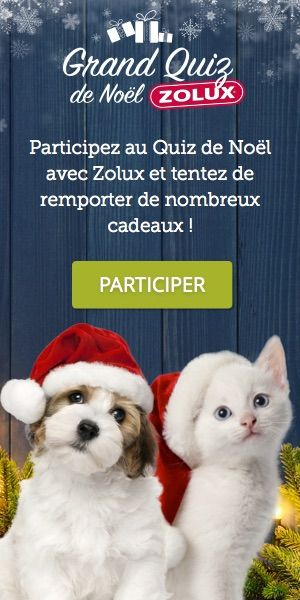 Grand jeu concours : Happy New Year 2015 - Yummypets
