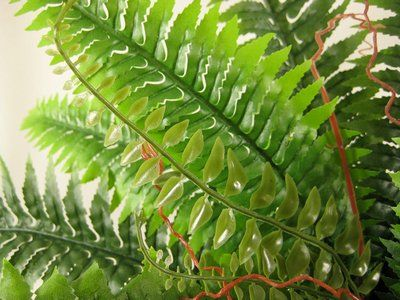 Silk Foliage Large Boston Fern Indoor Plants