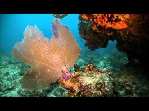 Puerto Rico Snorkeling Beaches / Spots - Map, Photos, Guide