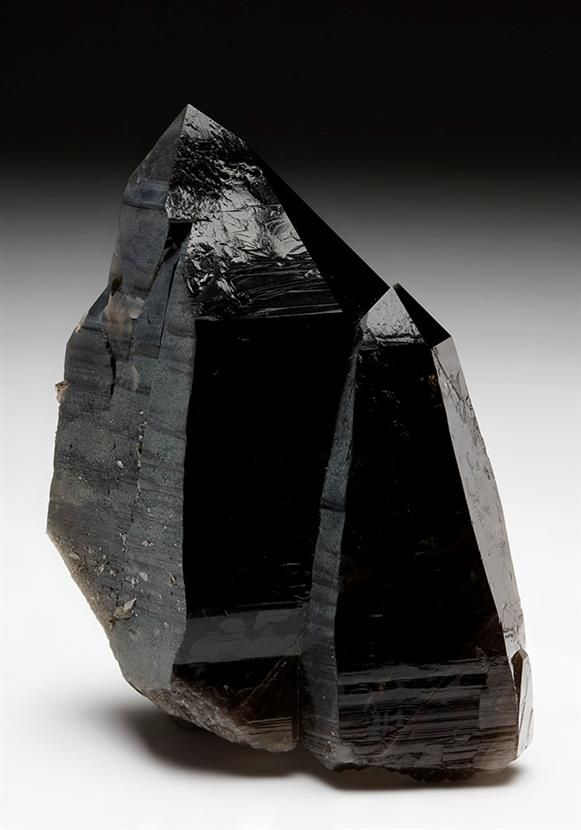 Two very lustrous black, well-terminated crystals of Smoky Quartz in the parallel position measuring to 9cm tall are selectively coated on some faces by grey-green Chlorite, from Austria.