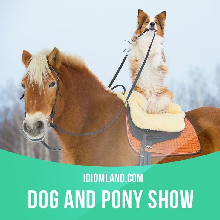 """""""Dog and pony show"""" is a presentation which designed to"""