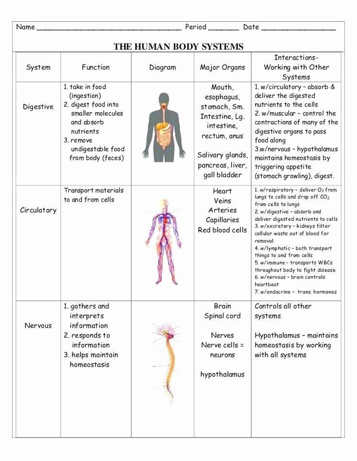 Digestive System Worksheets Middle School En organ Systems
