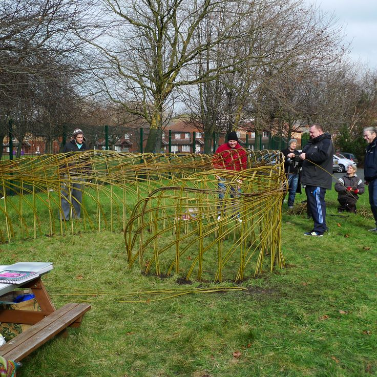 Living Willow Fence Living Willow Sculpture Wattle And
