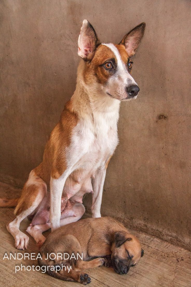 http://learndiscoverbefree.com/volunteer-at-playa-animal-rescue-mexico/