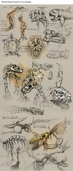 "Sketches by Della Tosin, via Behance. Try a ""da vinci study"" on dinosaurs or something else?"