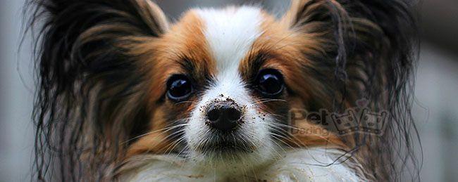 el celo en las perras =>>>>>>>>>>>>>>>>>>>