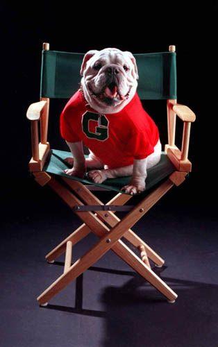 Uga V: Georgia Bulldogs Mascot And Movie Star. SUPER STAR UGA