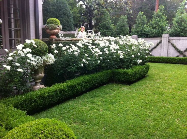 I really love the border of hedging that surrounds the white roses/plants. (Via The Creeping Fig)