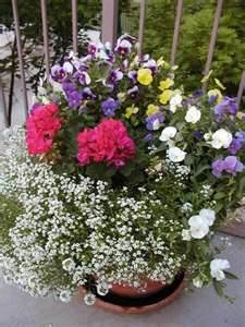 Flowers: Potted Collections