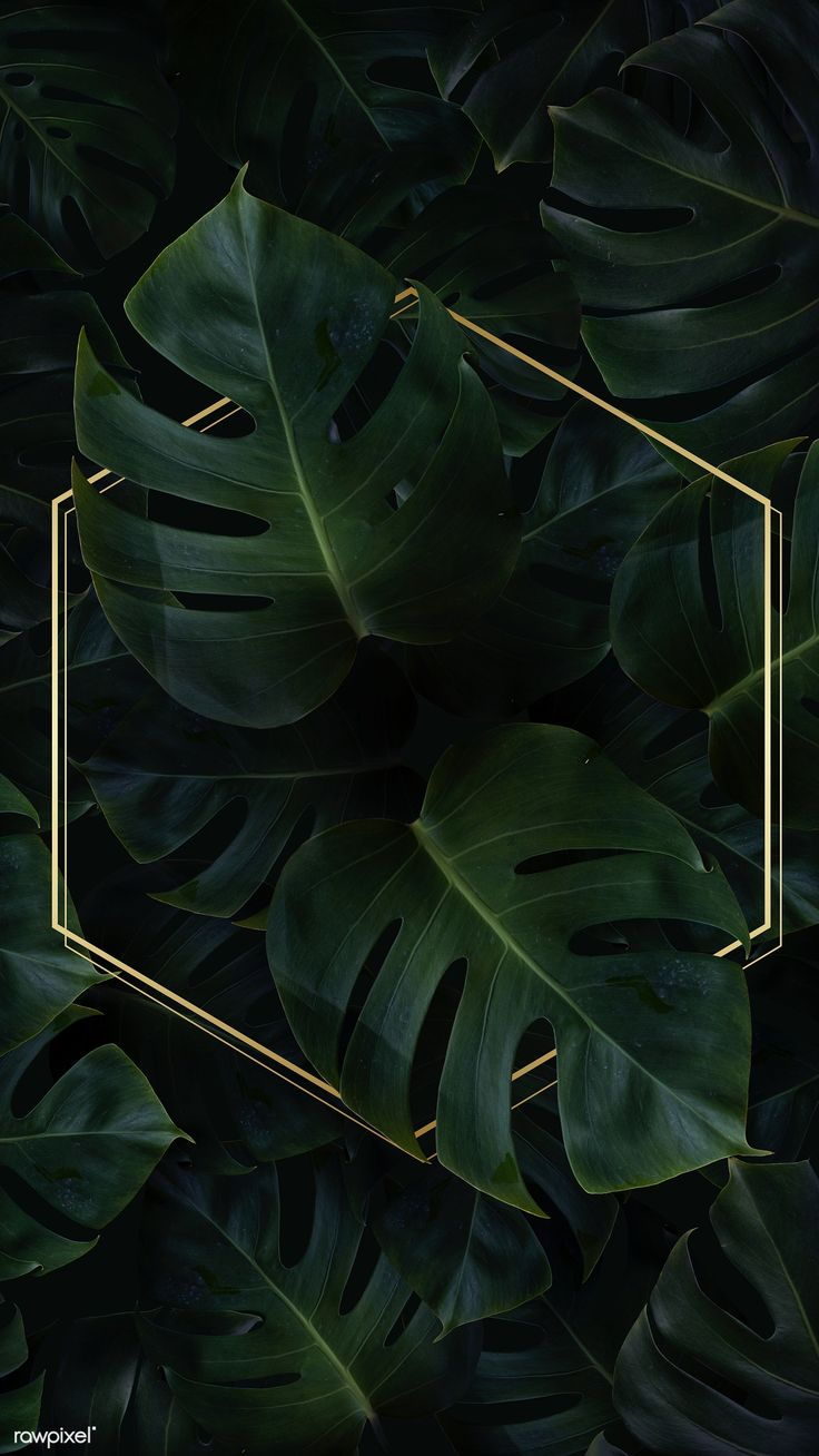Download premium image of Hexagon golden frame on a tropical background