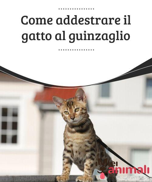 Come addestrare il gatto al guinzaglio  Se avete deciso di portare il vostro #gatto a passeggio al guinzaglio, dovrete tener presente una cosa ovvia: che non si tratta di un cane. Perciò, prima che il vostro amico #peloso si abitui a questo tipo di attività, ci vorrà del #tempo. #ADDESTRAMENTO