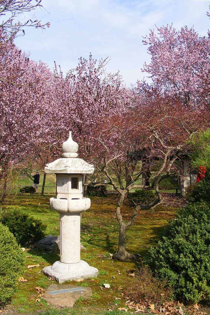 Where To See Cherry Blossoms In The Us Local Adventurer Travel Adventures In Las Vegas World Wide Cool Places To Visit Midwest Travel Midwest Vacation Spots