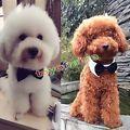 Haustier Hund Welpen Katzen Fliege Krawatte Kragen Kleidung für Hochzeitsfeiern