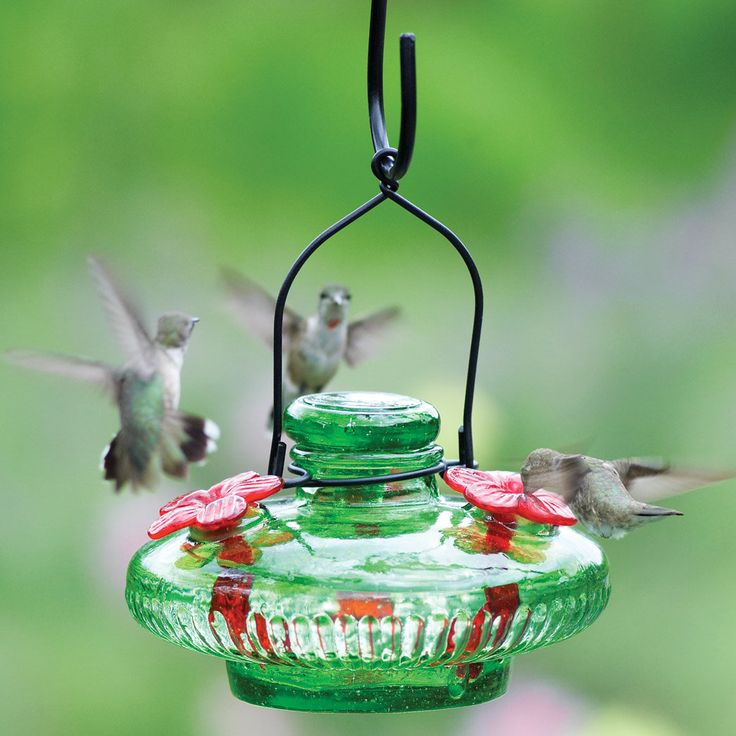 82 best images about Hummingbird Love on Pinterest
