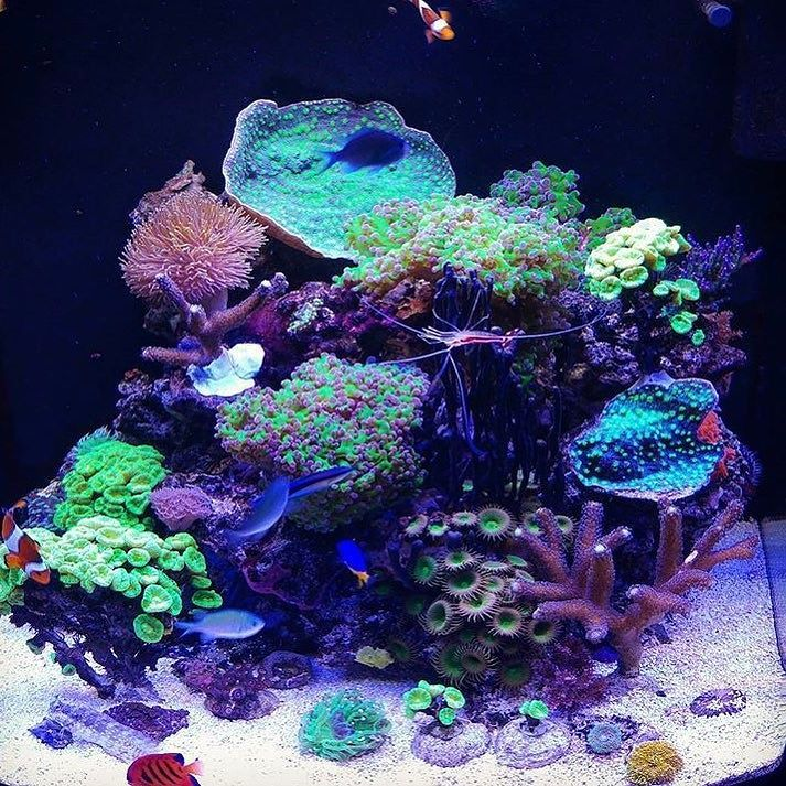 So many things I like about this @my_reef_tank  #polyplab . Just go: www.polyplab.com . . #coral #reeftank #coralreeftank #reef #reefpack #reef2reef #reefcandy #reefersdaily #reefrEVOLution #coralreef #coraladdict #reefaholiks #reefjunkie #reeflife #instareef  #allmymoneygoestocoral #instareef  #reefpackworldwide #ilovemyreef #rarecorals #reefing #exoticcorals #reefporn #reeferdise #reefers4reefers #coralporn #aquarium #polyplab